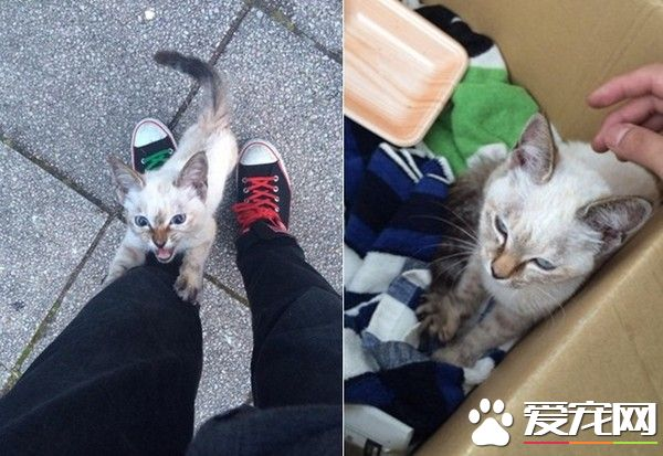 小猫半路拦截逼包养 绕腿攀爬求主人收编